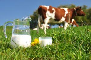 Tratamiento contra las enfermedades provocadas por la leche