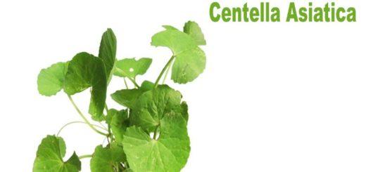 propiedades Centella-Asiatica