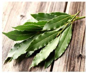 Beneficios de los Remedios Caseros con Eucalipto