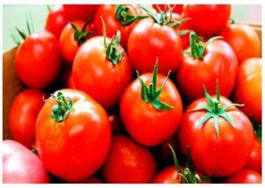 Problemas con los tomates transgénicos