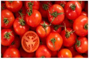 Desventajas de los tomates transgénicos